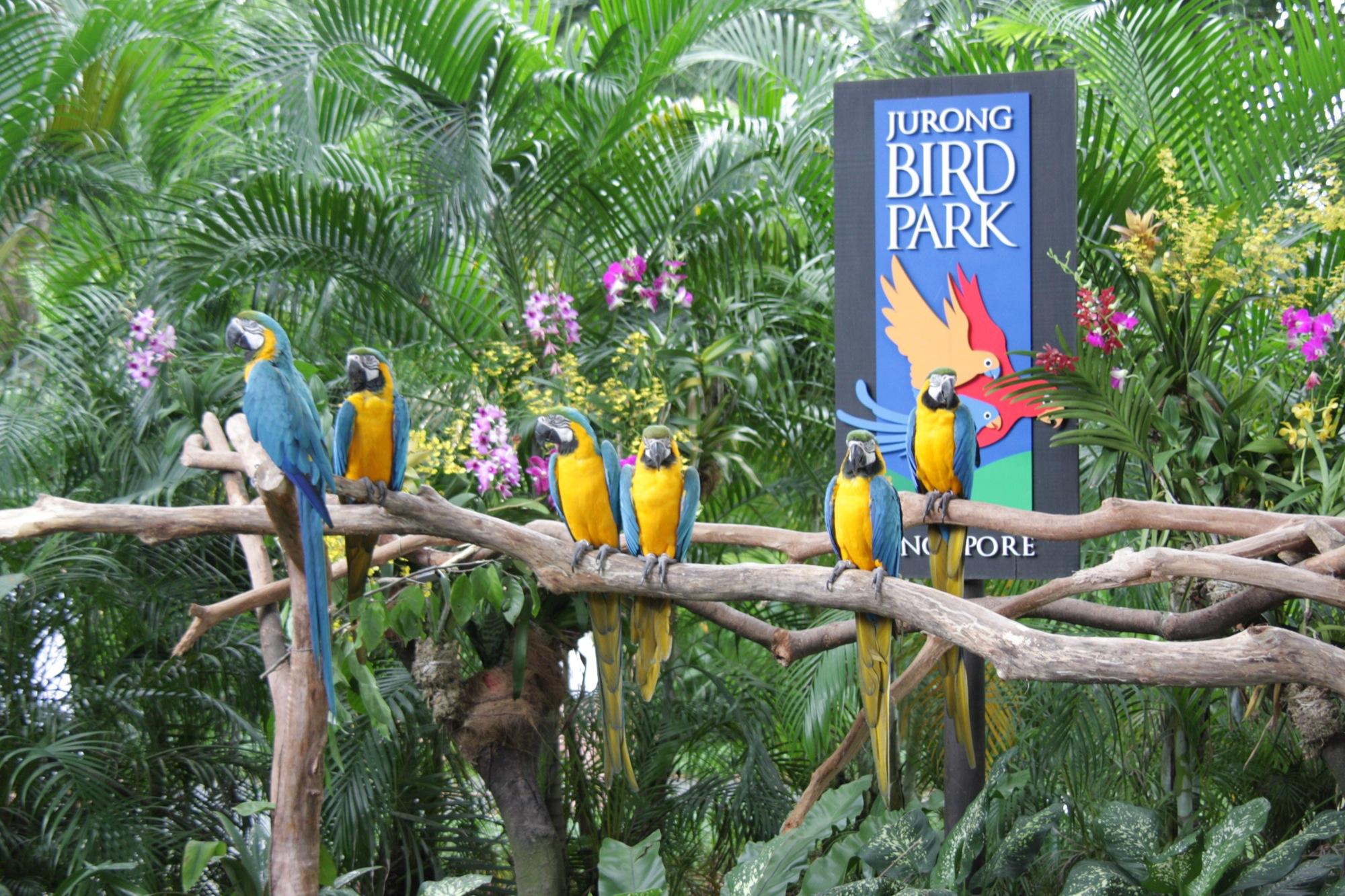 Ara_ararauna_-Jurong_Bird_Park_-sign-8a