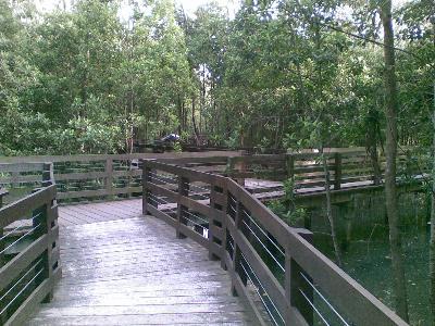 Pasir Ris Park Mangrove Swamp