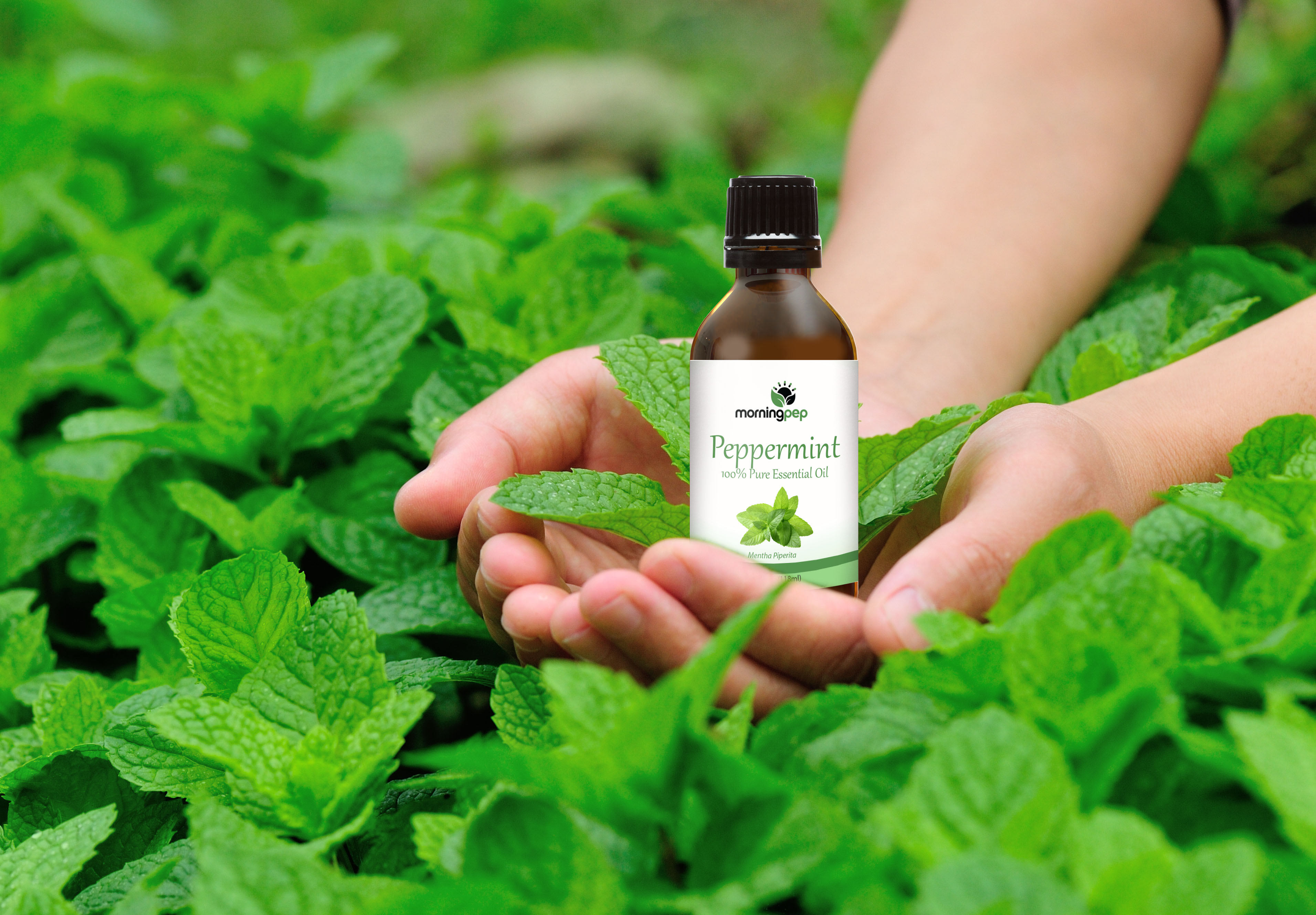 peppermint-oil-image-3